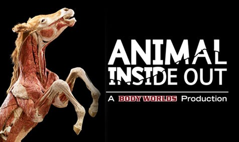 Body Worlds - Animals Inside Out