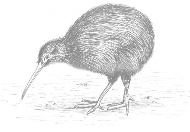 Kiwi Physio logo